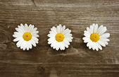 Daisies blossom on old wood — Stock Photo