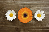 Daisy and Gerbera — Stock Photo