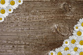 Wood with little daisies — Stock Photo