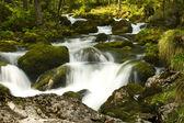 Rapids with stones — Stock Photo