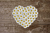 Daisies on old wood board — Stock Photo