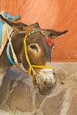 Greek donkey — Stock Photo