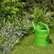 Stock Photo: Watering cin garden