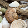 Collection of beach findings — Stock Photo #10708850