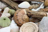 Collection of beach findings — Stock Photo