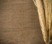 Ears spike on wood texture — Stock Photo