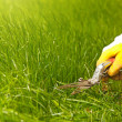 Grass lawn trimming, garden shear and yellow glove - Stock Photo