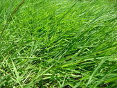 Herbaceous plants — Stock Photo