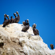 Stock Photo: Birds Tanning on Boulder