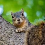 Attentive Squirrel — Stock Photo