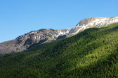 Peaks Above the Treeline — Stock Photo