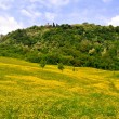 Stock Photo: Flower meadows of hills