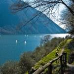 Path of the olive, Gandria - Switzerland — Stock Photo #10693355