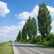 Empty road with poplar trees — Stock Photo #10681796