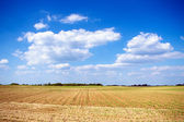 Young field at sunny day — Stock Photo