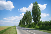 Empty road with poplar trees — Stock Photo