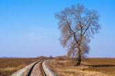 Ensamt träd av järnvägen — Stockfoto