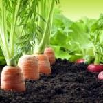 Vegetables growing in garden — Stock Photo #10689423