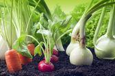 Vegetables growing in garden — Stock Photo