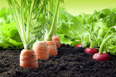 Vegetables growing in garden — Stockfoto