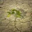 Tree on dry earth — Stock Photo