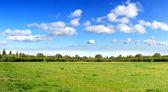 Panorama of spring field — Stock Photo