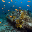 Stock Photo: Remains and cargo of Yolandin Red Sea.