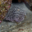 Feather duster worm in the Red Sea. — Stock Photo #10720729