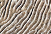 Texture of hard coral in the Red Sea. — Stock Photo