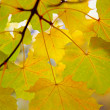 Foto Stock: Autumn twig