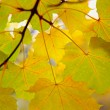 Stock Photo: Autumn twig