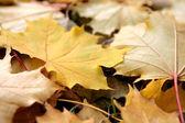 Güzel yaprakları — Stok fotoğraf