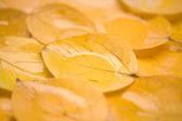 Orange leaf — Stock Photo