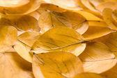 Liść — Zdjęcie stockowe
