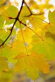Höstens twig — Stockfoto
