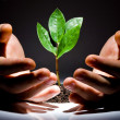 Stock Photo: Hands with plant