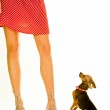 Lady with a dog — Stock Photo