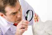 Looking at hen — Stock Photo