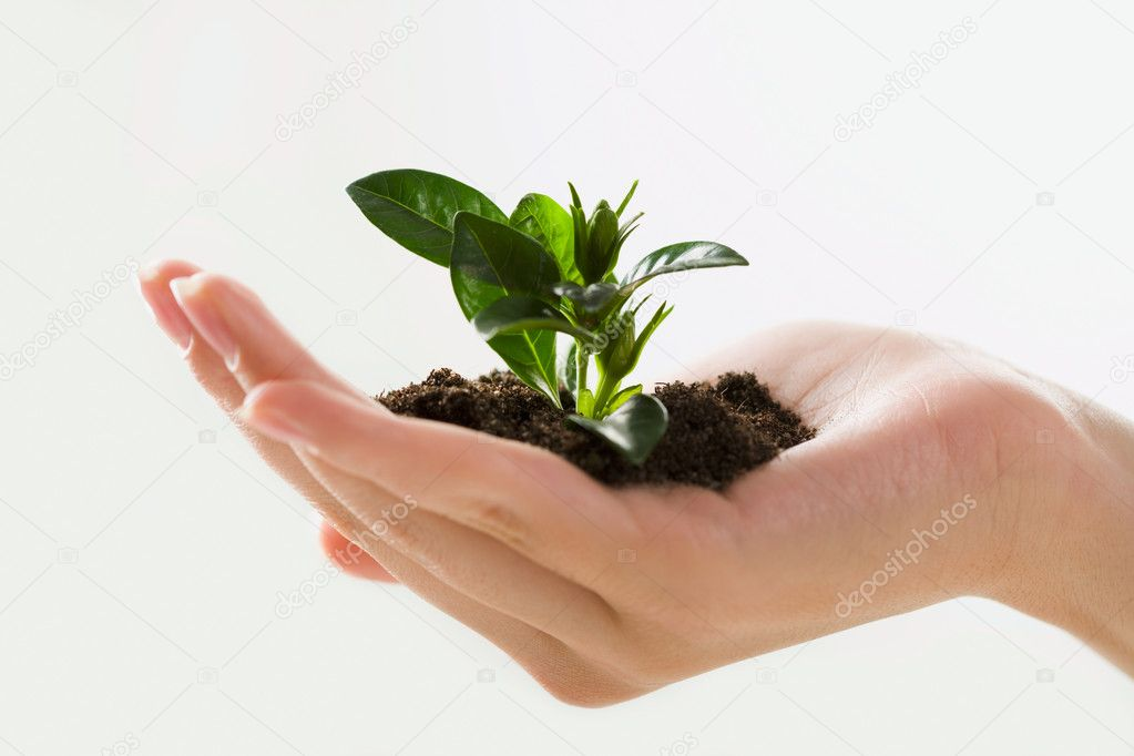 Image of female hand holding the small plant — Stock Photo #10712238