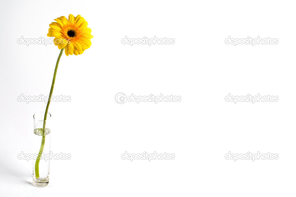 Image of a yellow daisy in glass of water isolated on white background — Stock Photo #10719485