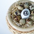 Net egg - Stock Photo