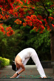 Yoga bend — Stock Photo
