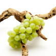 Wine grapes — Stock Photo #10656557
