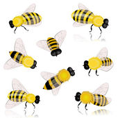 Insects bees