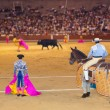 thumbnail of Matador and bull in bullfighting at Madrid