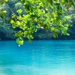 thumbnail of Jamaica. A Blue lagoon. (Popular after shooting the film wit