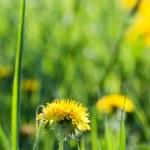 Spring's flower