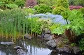 Lush garden pond
