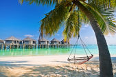 Beach Hammock under palm trees