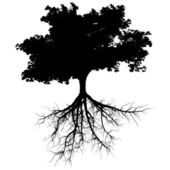 Silhouettes of tree with it's roots
